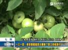 一三一团:淮安援建蔬菜大棚鼓了职工的钱袋子