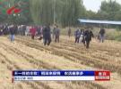 不一样的丰收:稻田来捉鸭  农活趣事多
