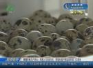 【圆梦小康】鹌鹑养殖大户冯云:年收入700多万元  带动60多户周边居民家门口就业
