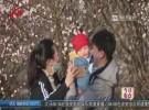 【春日美景】千年古堰万株梅花盛开  积极防控文明观赏