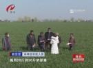 防治小麥病蟲害 打牢夏熟豐收基礎