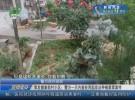 事发健康新村小区:警方一天内查处两起非法种植罂粟案件