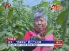 """【谱写新篇章  筑就中国梦】淮安:""""订单农业""""助力产业扶贫"""