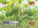 淮阴区马头镇利民村:土里掘金兴产业  脱贫攻坚奔小康