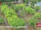 【走向我们的小康生活】刘老庄镇:实施乡村振兴战略 打造美丽宜居乡村
