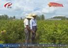 【风起潮涌改革路】农业综合开发铺就农民致富路  供给侧改革助推我市农业高质量发展