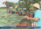 采芡实比赛 稻田抓鸭  水塘罩鱼  锣鼓声中庆丰年
