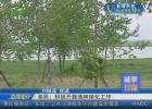 《城事扫描》淮阴:积极开展造林绿化工作