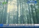 国庆长假文明游:亲近自然好去处 金湖水上森林公园游人如织