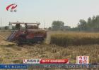 我市450万亩水稻开镰收割  新增超千台高性能收割机助力秋收工作