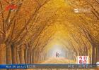 枫叶泛红胡杨如画   赏秋旅游正当时