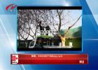 12月22日手机拍拍拍   修剪行道树