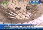 """春节临近:水产市场供需两旺 螃蟹成为""""抢手货"""""""