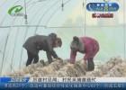 【新春走基层】厉渡村见闻:村民采摘菌菇忙