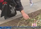 春节游园热闹非凡 志愿者倡导文明游园