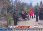 植树节临近绿化树苗销售火  果木树经济树成为抢手货