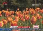 快来赏花!16万株郁金香扮靓钵池山公园