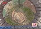 帮忙:市民举报公园砍树  园方解释病树清理