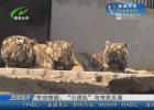"""市动物园:""""小虎队""""与市民见面"""