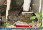 雨水管道问题已存在六年  物业表示马上改造