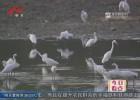 洪泽湖枯水期氤氲如画  万只白鹭聚集自成一景