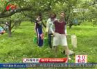 梨果飘香 相约柳湾——柳树湾第九届酥梨采摘节如期开幕