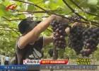 【核心价值观】残健携手献爱心  葡萄采摘欢乐多