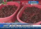龙虾大量上市  零售价创今年新低