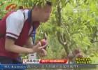 【七彩暑假  核心价值观】残障儿童体验采摘乐趣