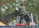 受台风影响     园林部门上路清理、加固行道树