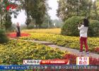 古黄河畔30000余平米格桑花盛放  花团锦簇喜迎新中国成立70周年