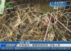 中秋临近:螃蟹供销两旺 价格上涨
