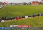 【提升四力水平】水稻良种观摩会  服务农户增产增收
