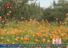 硫磺菊盛开 快来古黄河生态园赏初秋美景