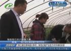 【壮丽70年 奋斗新时代】清江浦区黄码镇大李村:特色红椒产业助力农民增收致富