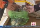 市消保委开展网购螃蟹大调查:个头缩水  捆扎绳重量不一