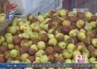 秋季水果缤纷上市  桔子苹果争尝鲜