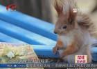 帮忙:这只奇怪的小动物是啥?