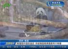 熊猫馆升级改造后 市动物园将再借展两只熊猫