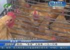 """民俗:""""冬至""""大如年 一九一只鸡"""