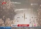 【冬日美景】白马湖:群鸟齐舞美如画 大批候鸟飞?#36136;?#22320;公园过冬