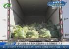 【众志成城 抗击疫情】爱心志愿者向市第四人民医院和市公安局捐赠蔬菜2万斤