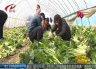 """菜农愿捐万斤蔬菜  为战""""疫""""出份力"""