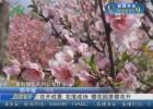【文明游园】花开成景 花落成诗  樱花园里樱花开