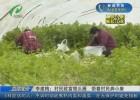 【圓夢小康 崛起江淮】李建梅:村民致富領頭雁  帶著村民奔小康