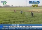 """【众志成城 抗击疫情】武墩村见闻:战""""疫""""春耕两不误"""