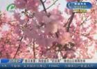 """【文明游园】春日美景:海棠盛开""""花似海"""" 钵池山公园等你来"""