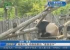 """高温天气 动物园里的""""喜怒哀乐"""""""