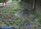 【文明巡访进行时】雨水污水排进绿化带  小区业主生活受影响