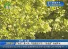 """""""末伏""""第一天:气温逼近37℃  """"秋老虎""""余威不减"""